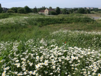 Biodiversitet giver biodiversitet